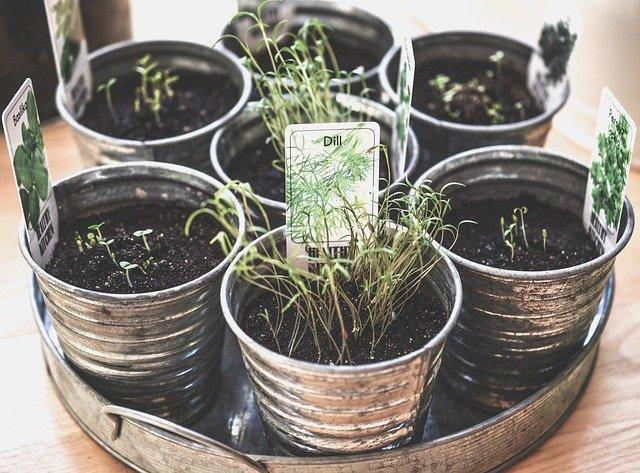 plantas aromatizadoras