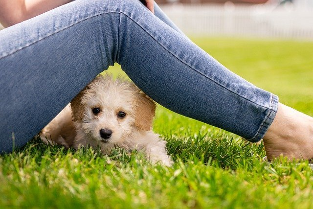 perro-orfateando-parte-intima
